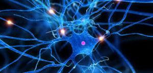 immagine rete neurale